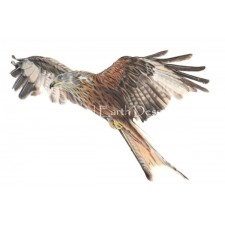 Rowan The Red Kite