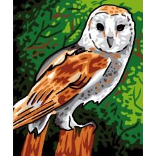Canvas Tawny Owl