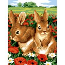 Rabbits in poppy field