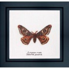 Cross Stitch Kit Emperor Moth