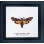 Cross Stitch Kit Death's-head Hawk Moth