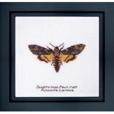 Cross Stitch Kit Death's-head Hawk Moth