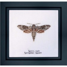 Cross Stitch Kit Sphinx Moth