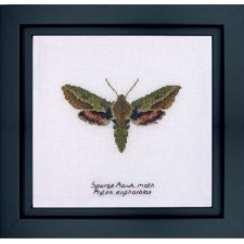 Cross Stitch Kit Spurge Hawk Moth