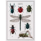 Cross Stitch Kit The History of Insects
