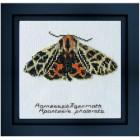Cross Stitch Kit Harnessed Tiger Moth