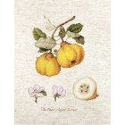Cross stitch kit The Pear shaped Quince