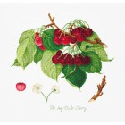 Cross stitch kit The May Duke Cherry
