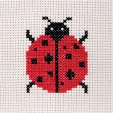 Lieveheersbeestje - Ladybird