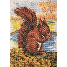 Rode eekhoorn - Red Squirrel