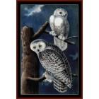 Snowy Owls II