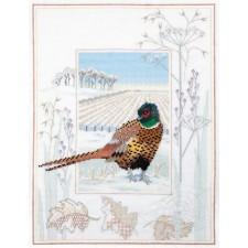 Fazant - Pheasant