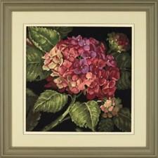 Hortensia (Hydrangea bloom)