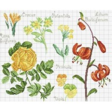 Duo Bloemen en Botanisch: Lelie en crocus - Duo Lys et crocus