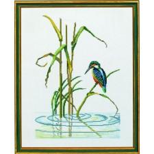 IJsvogel (kingfisher)