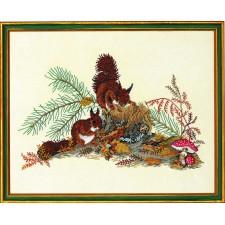 Eekhoorns (squirrels)