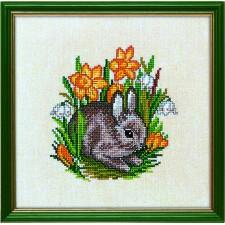 Jonge haas (young hare)