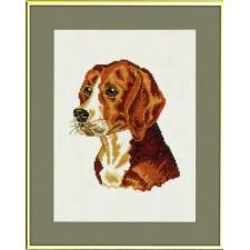 (OP=OP) Beagle
