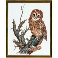 Uil (tawny owl)