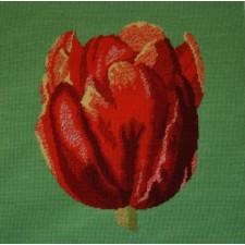 Kussen rode tulp - Red Tulip