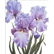 Mini Mauve Irises NO BK
