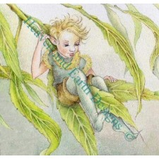 Willow Fairy Boy