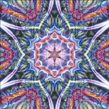 Habiscus Max Colors