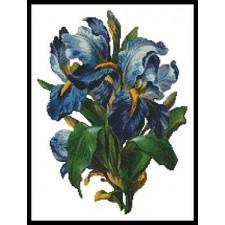 Bunch of Irises - #11285