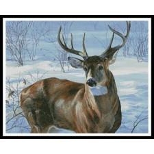 Whitetail Buck - #11292-CYPRS