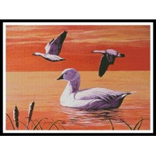 Snow Geese - #11293-MB