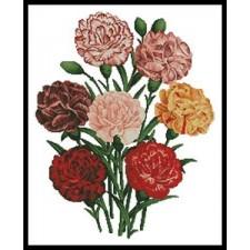 Carnations - #11313