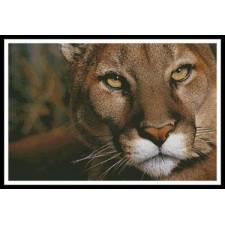 Mountain Lion Portrait - #11324