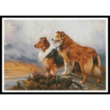 Two Collies Above a Lake - #11329