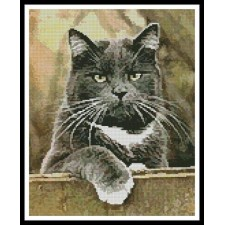 Cat on a Fence - #11333