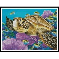 Young Green Sea Turtle - #11388-MGL