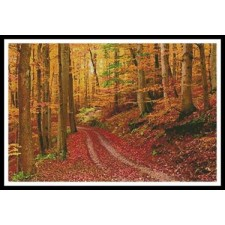 Autumn Path - #11397
