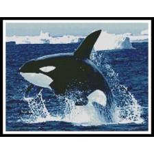 Whale - #10028