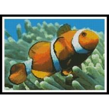 Clownfish - #10090