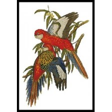 Parakeets - #10127