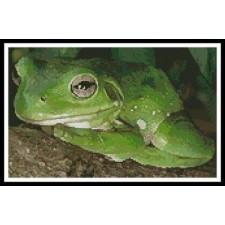 Green Tree Frog 2 - #10134