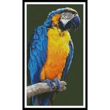Macaw - #10186