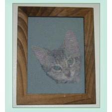 D204 Cuddles kitten