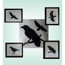 D303 Raven Silhouettes