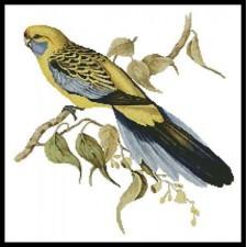 Yellow Rumped Parakeet - #10268