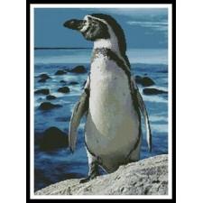 Penguin Photo - #10330
