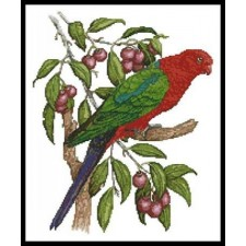 King Parrot - #10557
