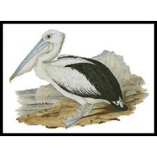 Pelican - #10559