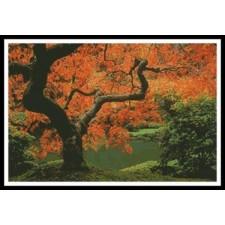 Autumn Tree - #10744