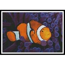 Clownfish in Anemone - #10780