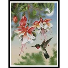 Fuschia and Hummingbird - #11003-PFLD